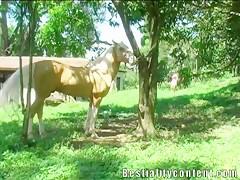 Pareja tienen sexo con el caballo