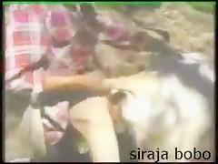 Sexo con la vaca
