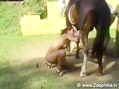 whore horse blowjob